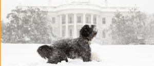 dog in whitehouse